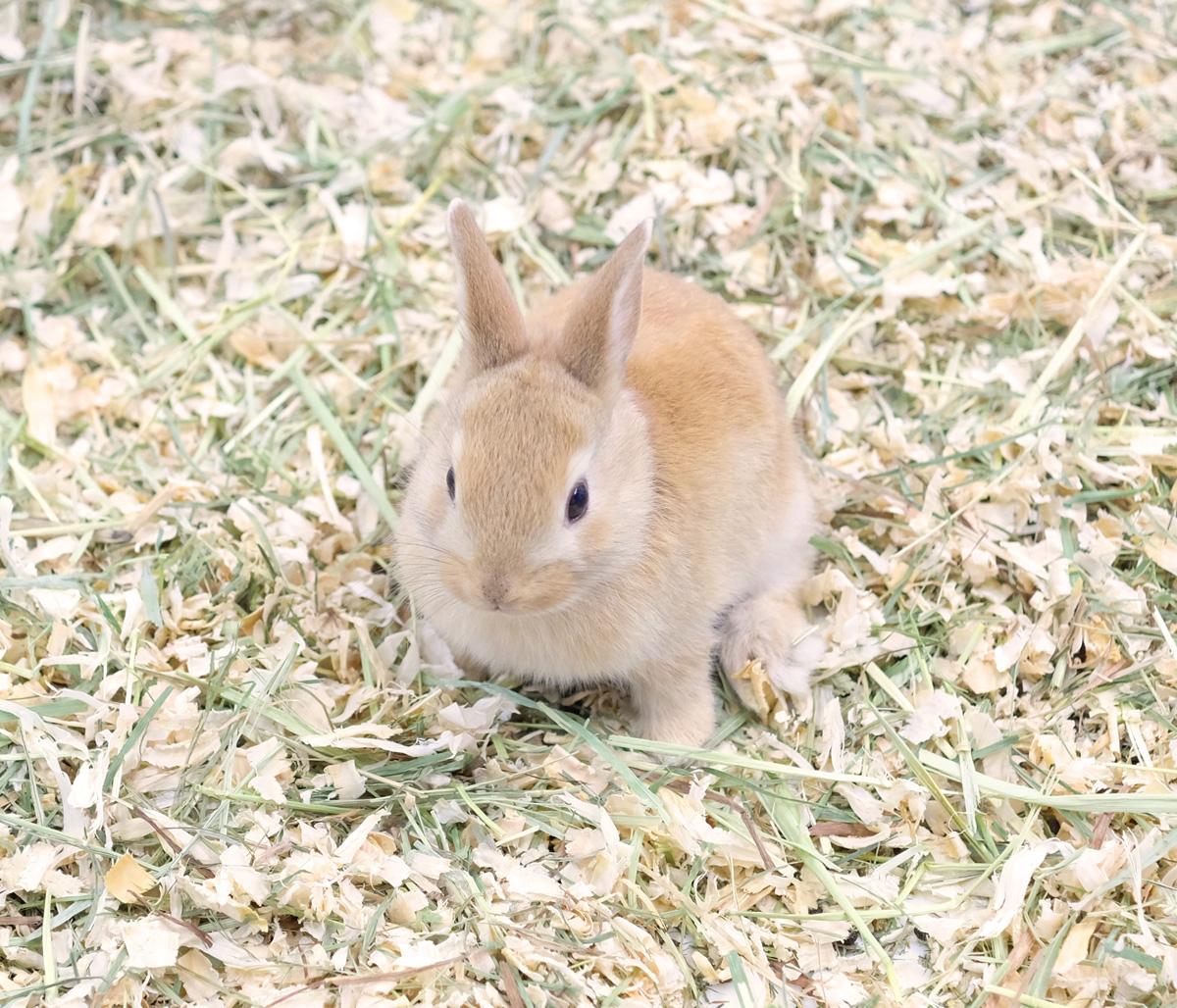 ウサギの鳴き声がプップッ、プゥプゥは○○の時!