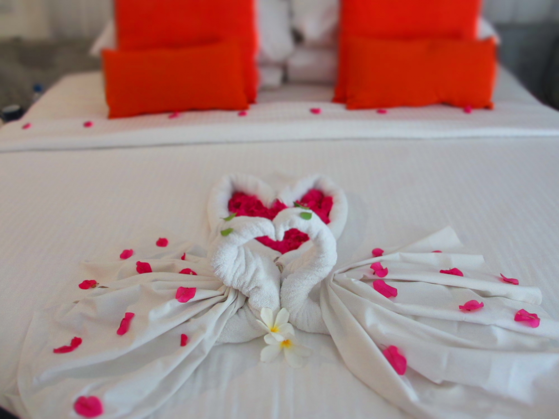 タイの結婚式のご祝儀について!マナーを確認しておこう!