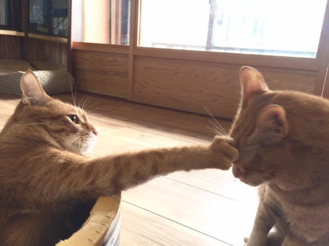 猫の親子喧嘩はある!?喧嘩の原因や仲良く飼う方法