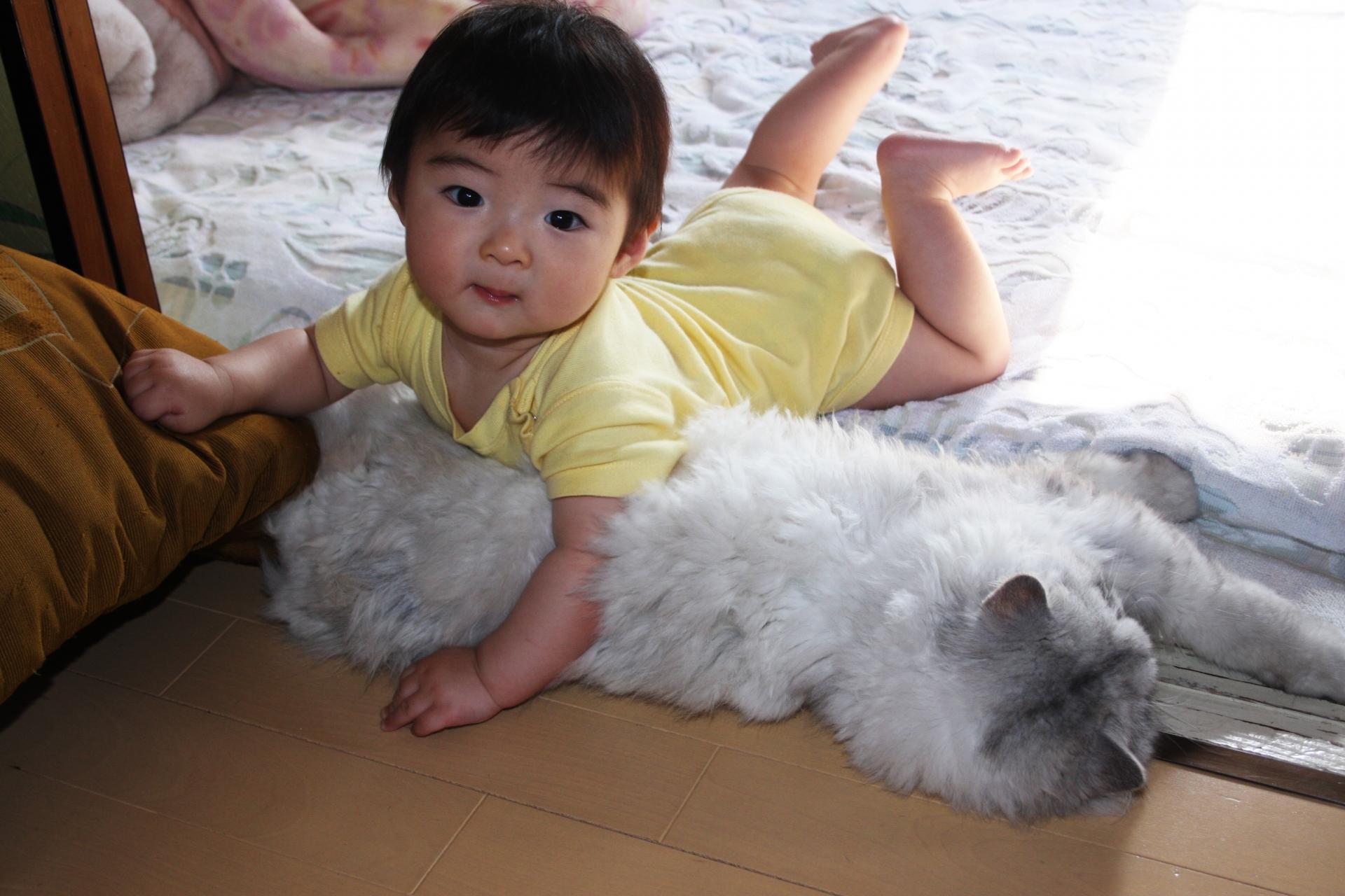 猫と人間の赤ちゃんが幸せに暮らすために知っておきたい注意点