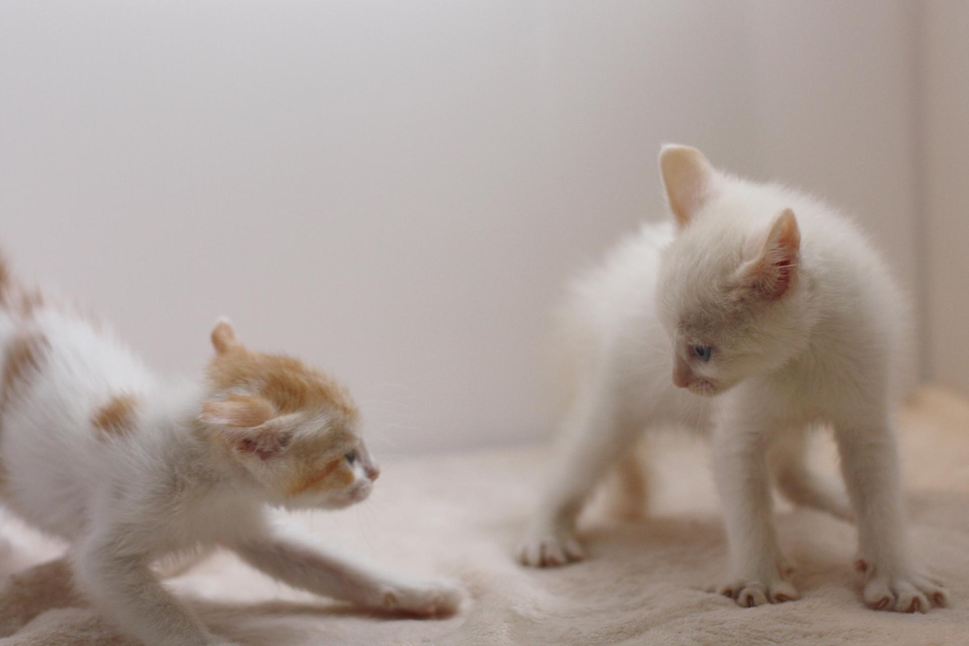 猫を2匹目飼う?後悔しないために知りたいメリットとデメリット