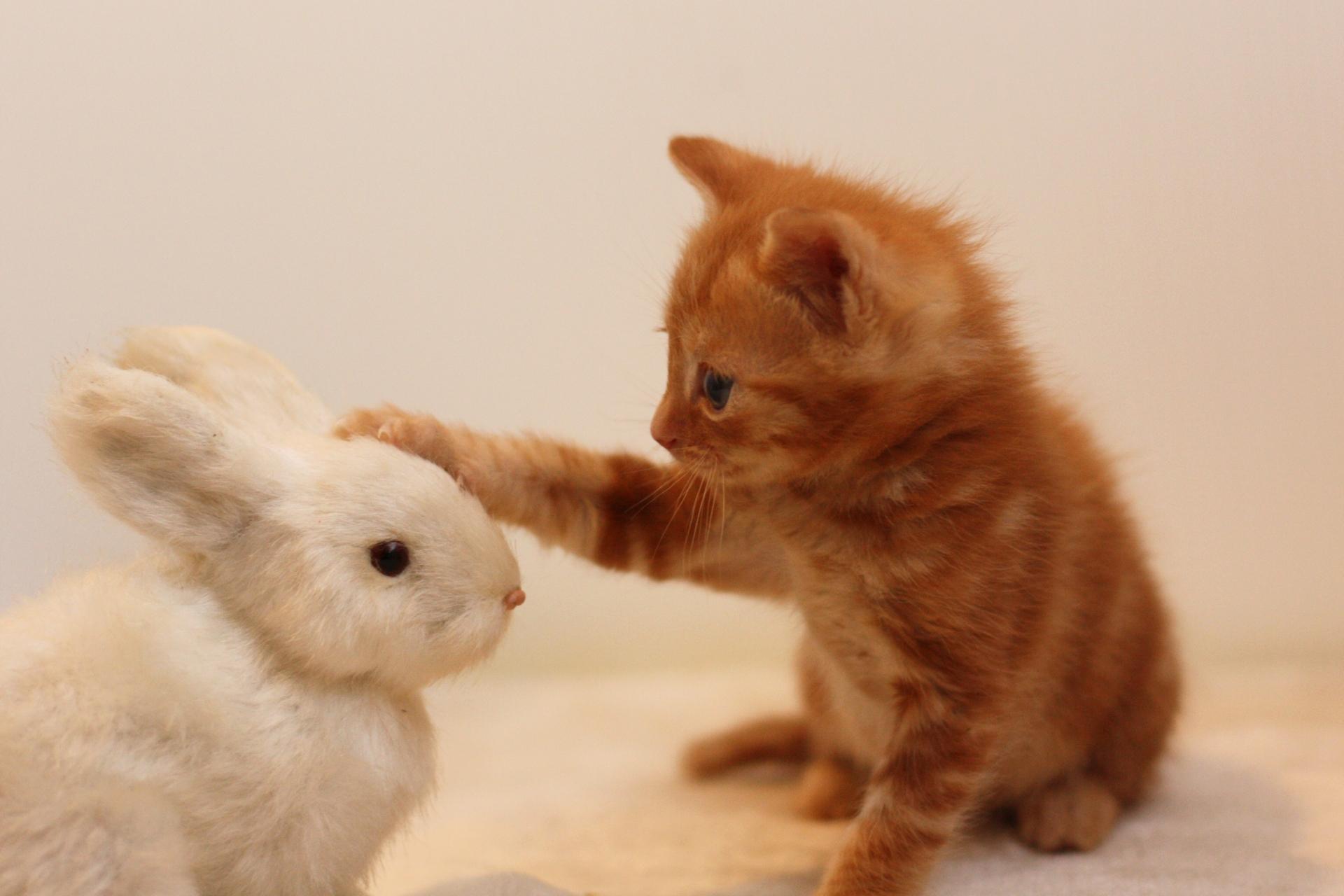 猫とうさぎの相性は?猫とうさぎを一緒の家で飼育する方法
