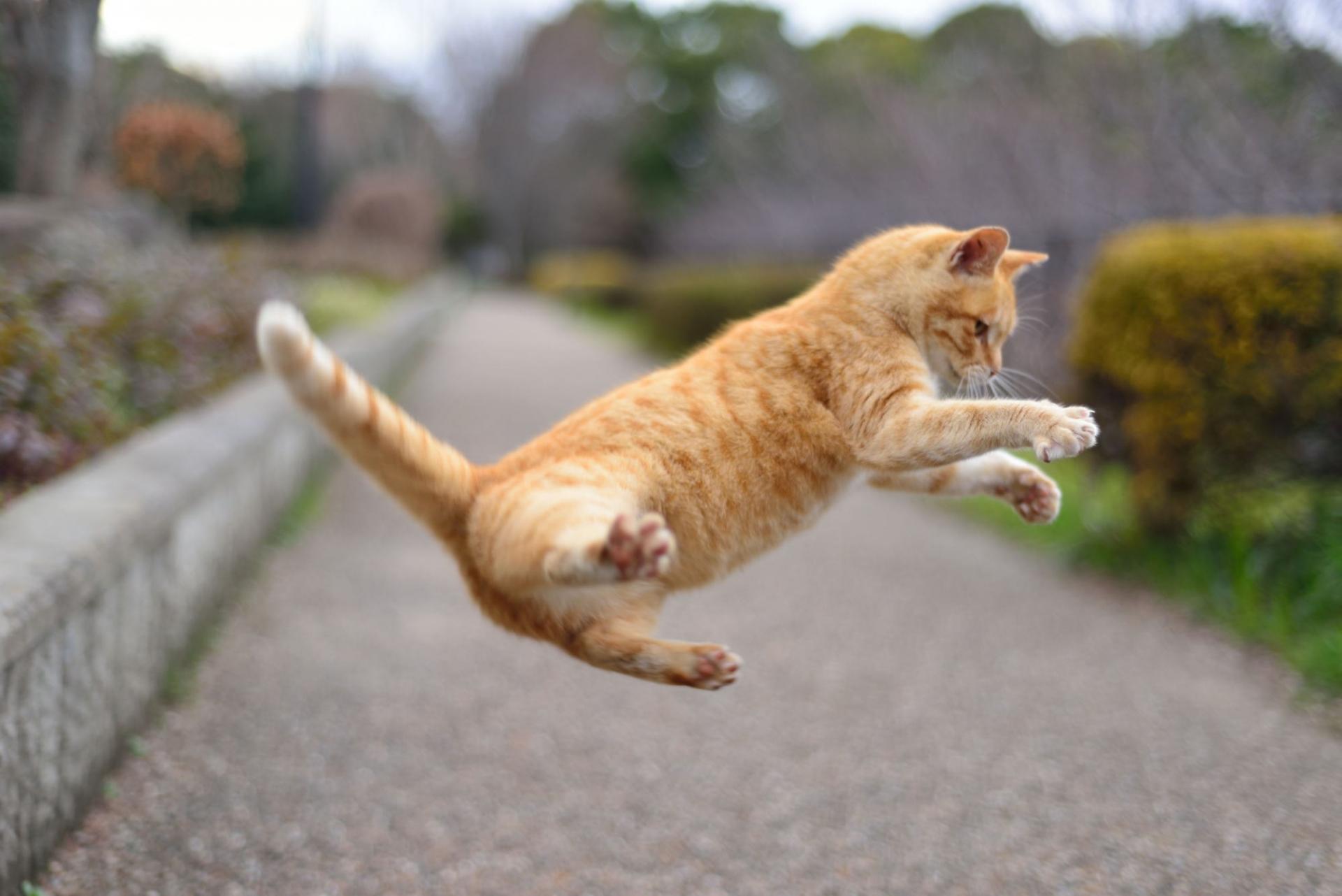 猫の飛び出しによる事故は多い!事故には十分注意しましょう!
