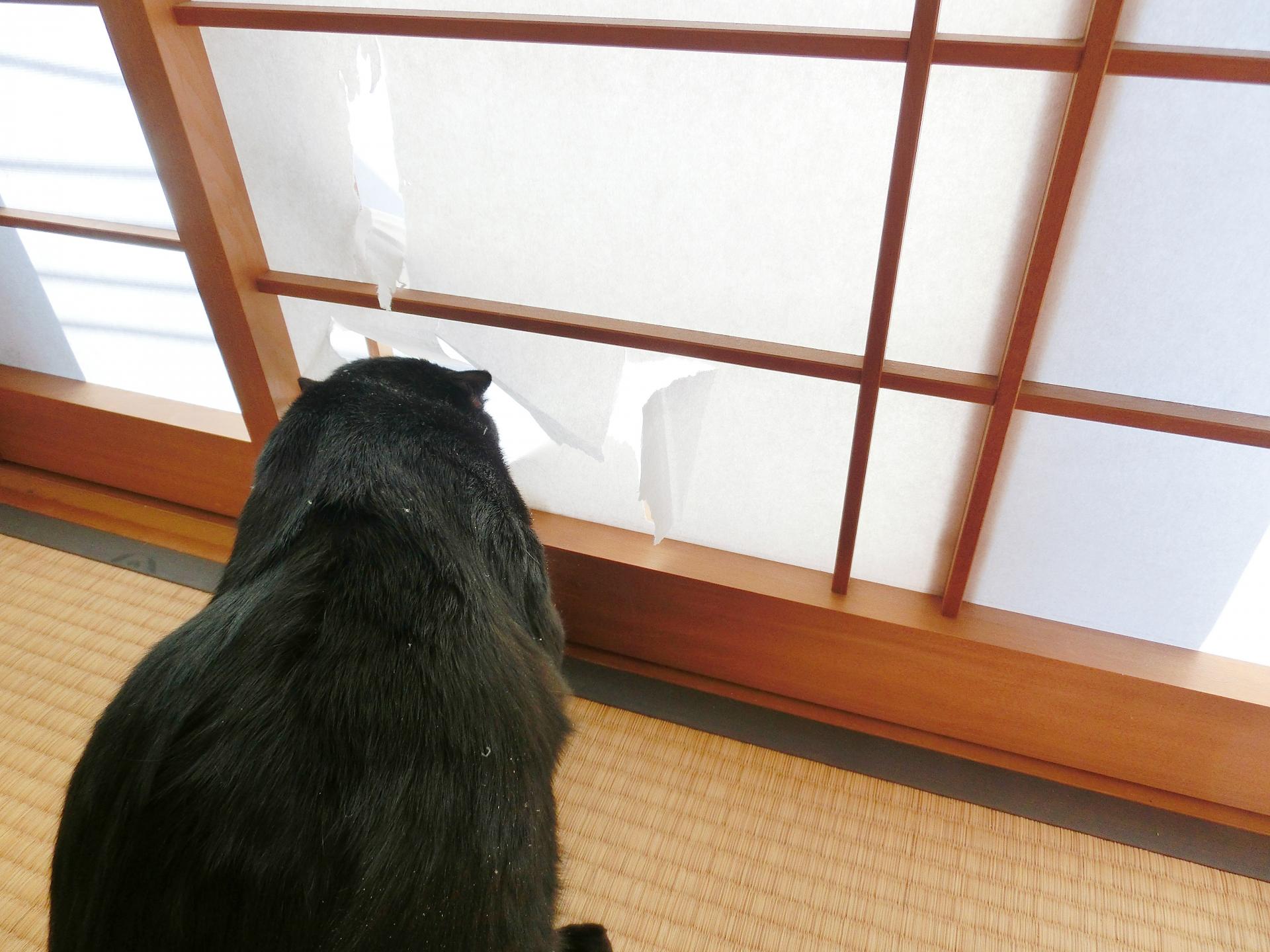 猫が網戸を破る、登るなど困った時の対処法あれこれ!