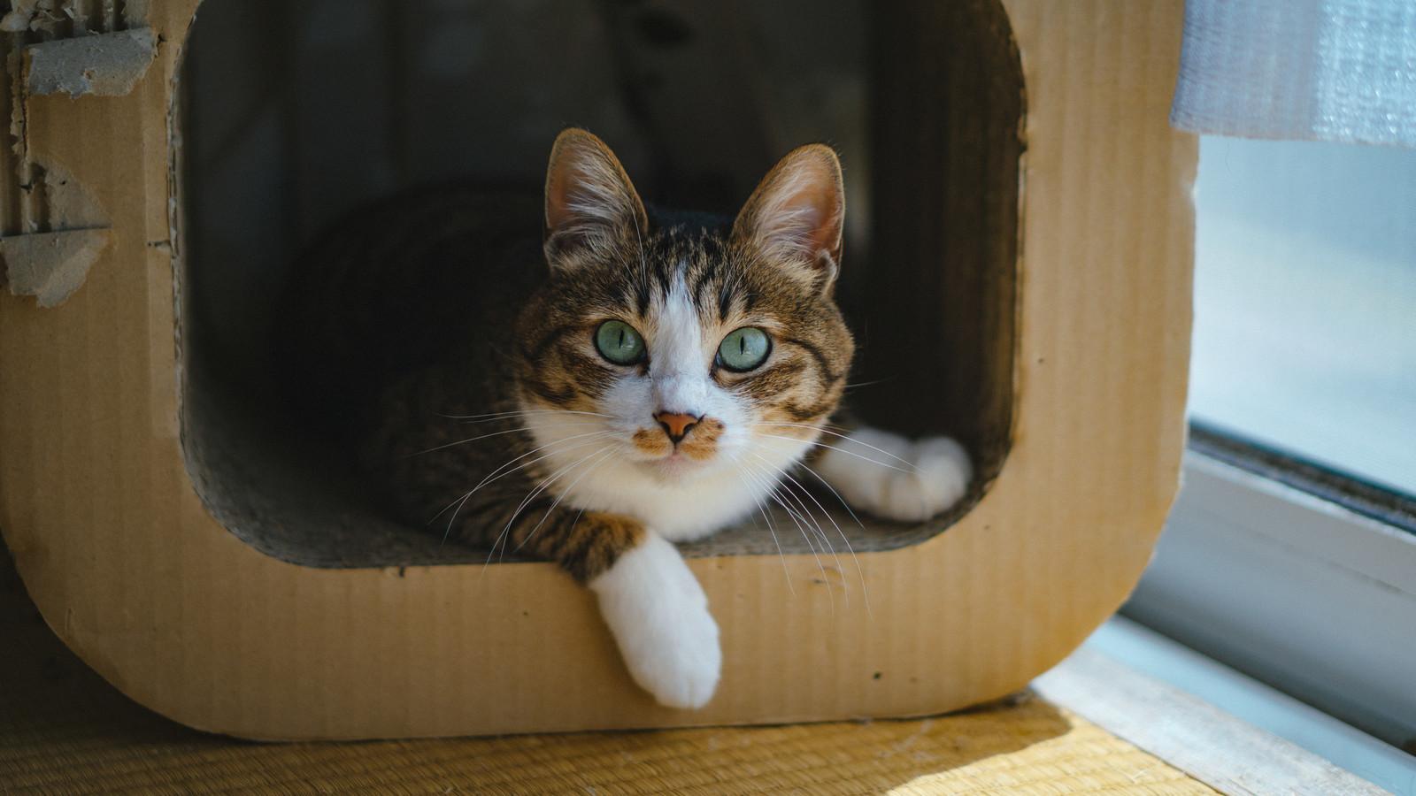 猫を救出したい場合はレスキューを呼ぼう!その条件について